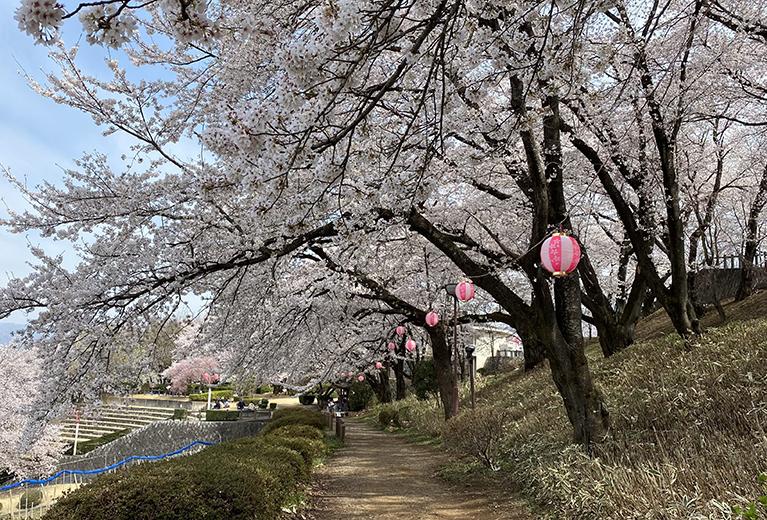 2021年の桜を求めて